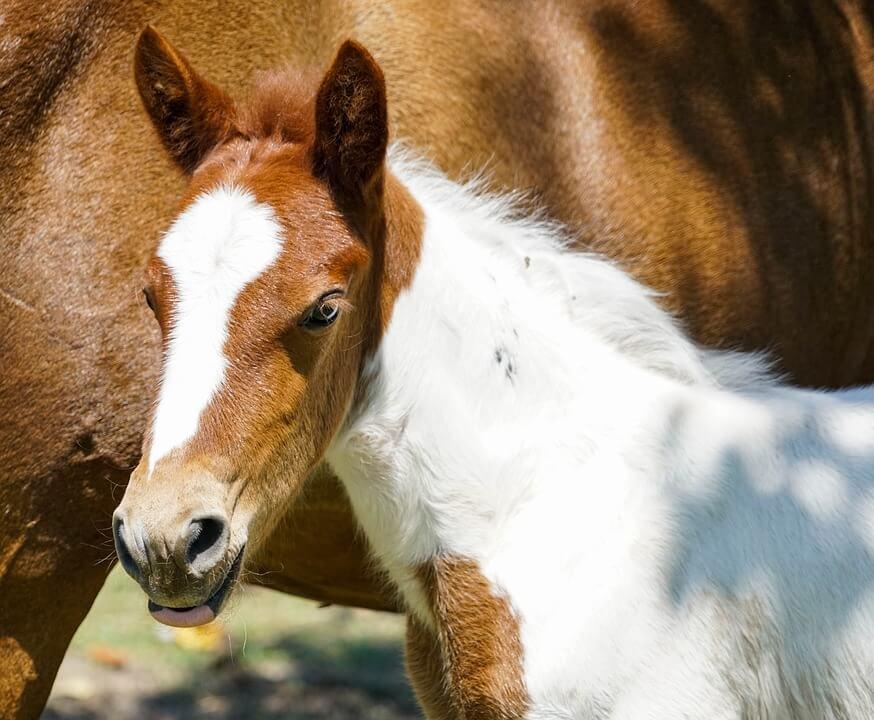 The Horse's Great Big Healing Heart