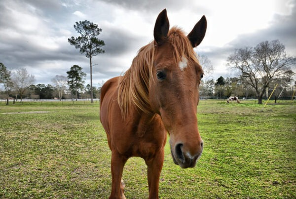 Chestnut Horse Janice L. Blake Your Mane Track Motivational
