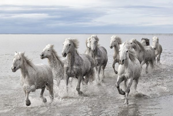 Amazing Horse Documentary Your Mane Track