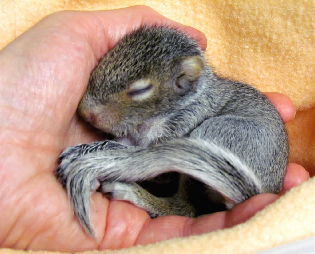 How To Rescue Wildlife – Or Not